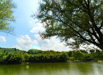 欣龍生態園全景部分